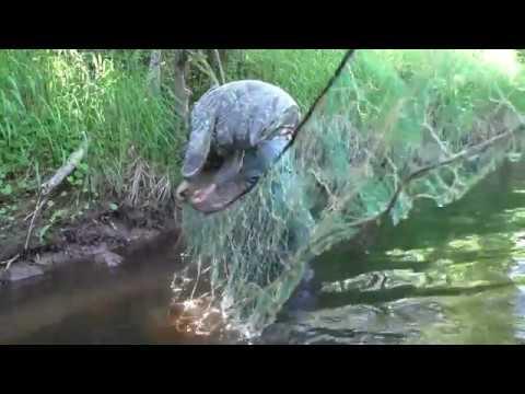 Ловля рыбы сетями на микро речке Дедовский способ