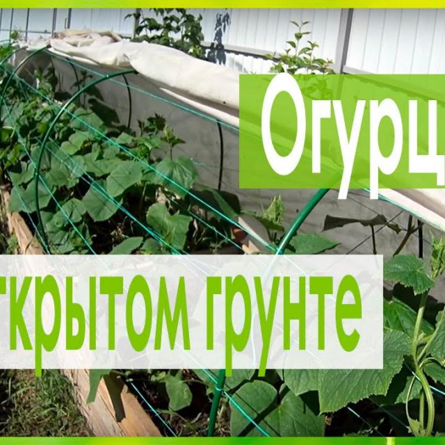 Выращивание огурцов в открытом грунте теплая грядка-короб Урожайный огород