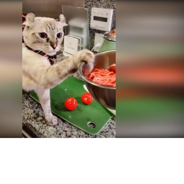 Приколы с животными 2019 #10 Смешные видео про котов и собак до слез 2019 Животные