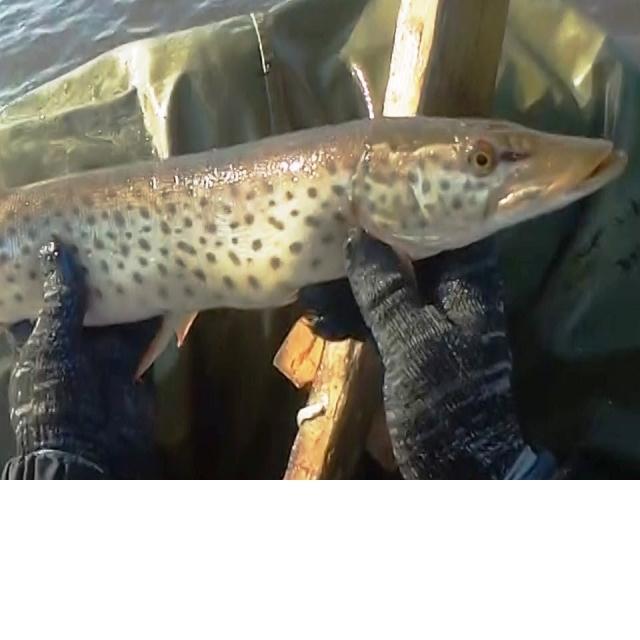 Рыбалка сетями, поздняя осень, один день на реке 1 часть