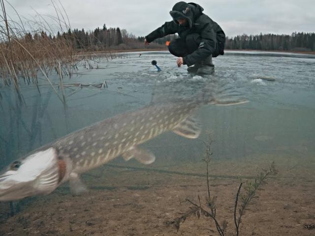 РЫБАЛКА НА ЖЕРЛИЦЫ И АТАКИ ЩУКИ НА ЖИВЦА! Зимняя рыбалка 2019 - 2020