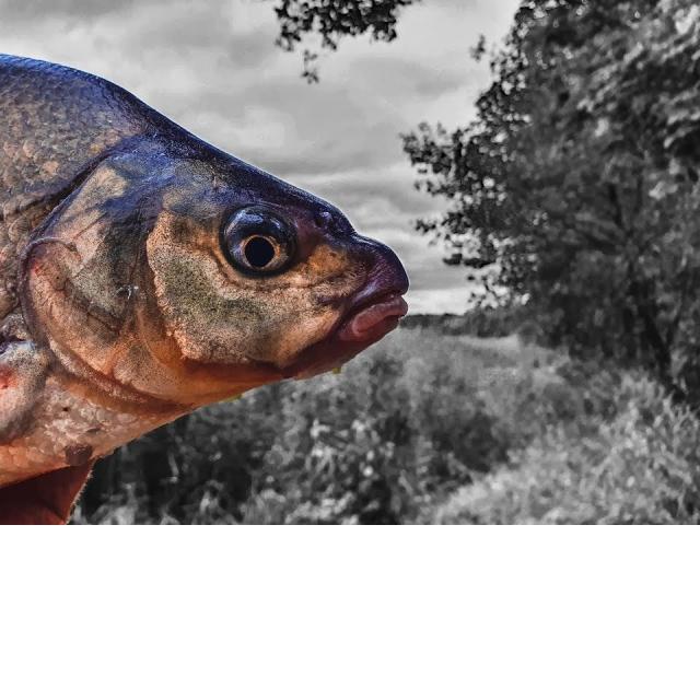 Ловля леща на фидер осенью Фидер на реке Вкусный обед на рыбалке