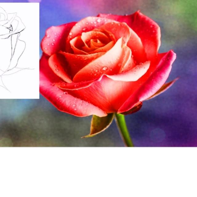 Как нарисовать Цветы Карандашом / Учимся рисовать цветы простым карандашом