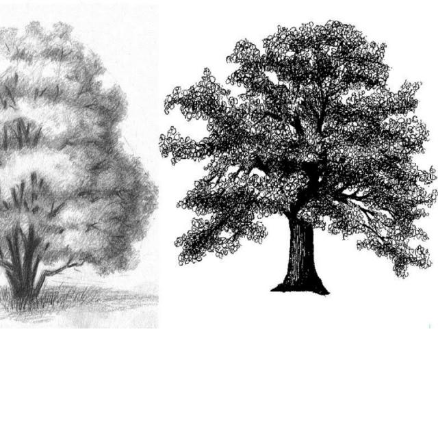 КАК нарисовать Пейзаж с деревьями карандашом