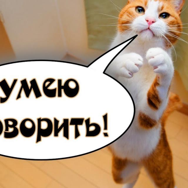 Говорящие коты и кошки 2018 смешные коты и кошки 2018 приколы с котами и кошками 2018 #77