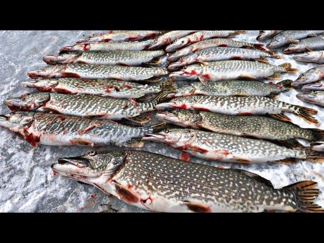 ЩУКИ СОШЛИ С УМА!!! БЕШЕНЫЙ ЖОР ЩУКИ В МАРТЕ! Рыбалка 2020