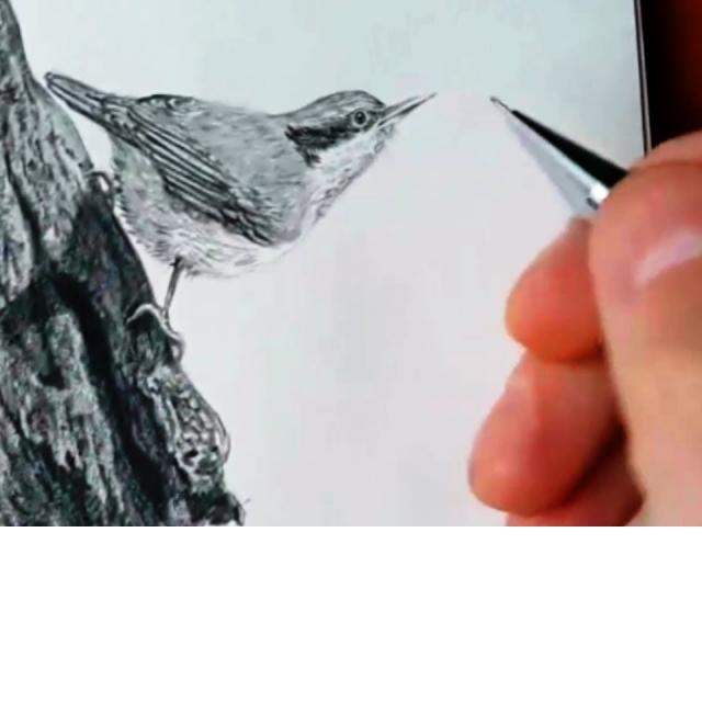 Как нарисовать Птичку карандашом/Учимся рисовать Птичку простым карандашом
