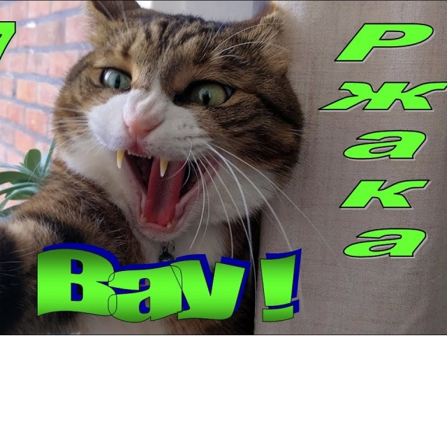 Смешные животные #7 Смешные коты Смешное видео Приколы 2019