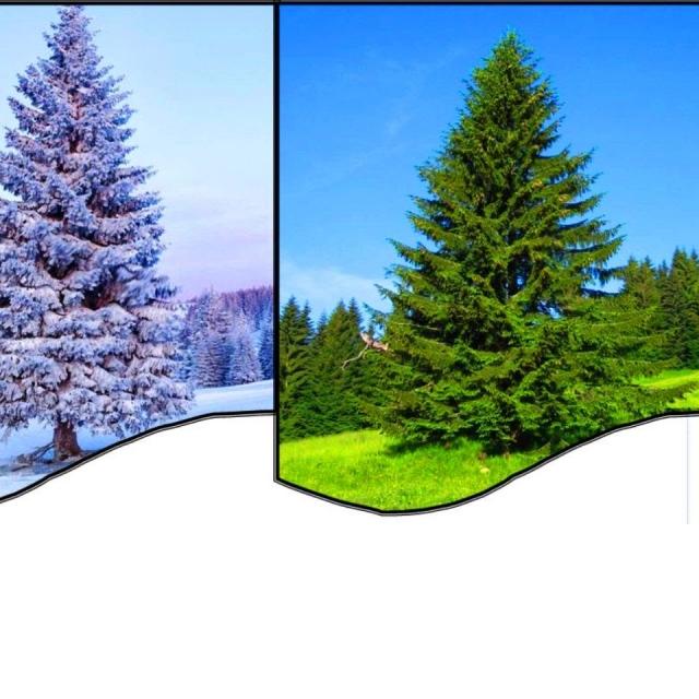 Как нарисовать Ёлочку зимой и летом Свет и Тень
