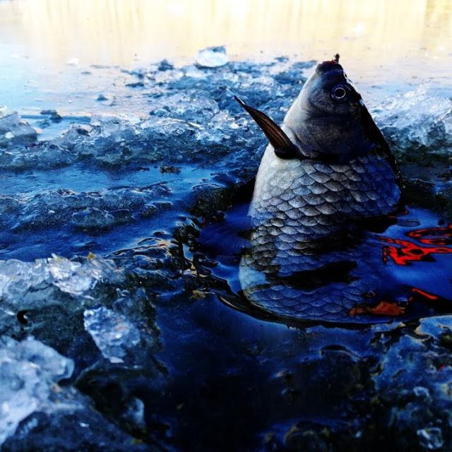 Зимняя рыбалка. Первый лёд 2018 ЛОВЛЯ КРУПНОГО КАРАСЯ