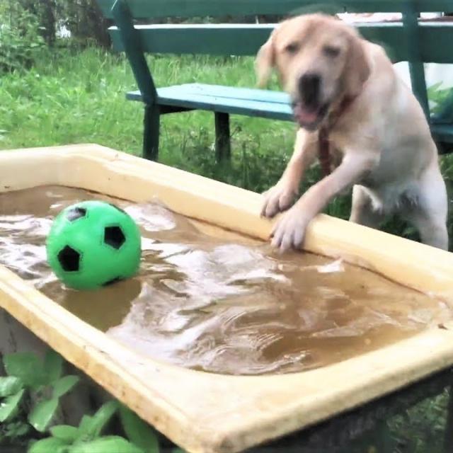 Приколы с Собаками Смешные собаки 2018 ТОПовая подборка 2018 #1