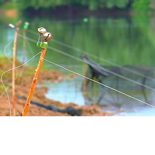 Бешеный клёв Сазана на закидушки рыбалка в дождь / Ловля сазана и карася на жмых макуху