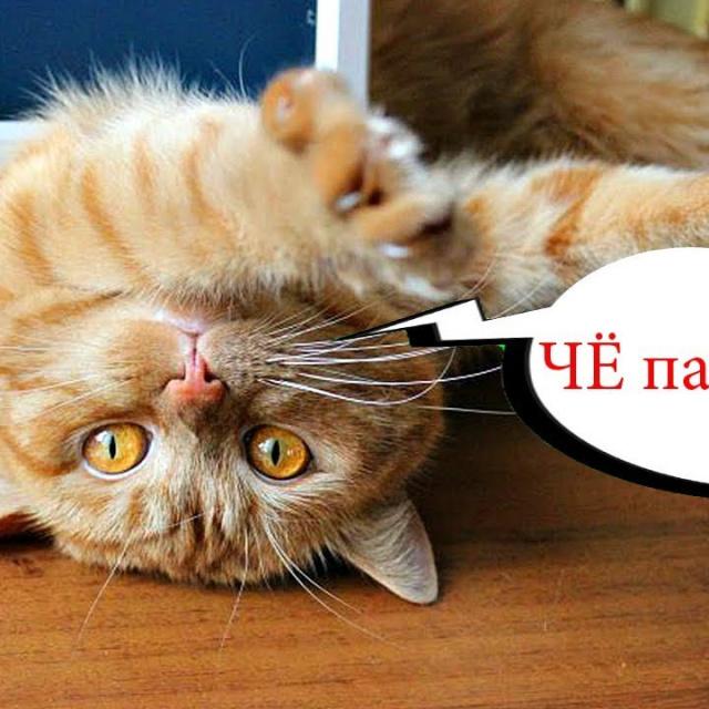 Приколы с котами с Озвучкой Смешные коты и кошки ТЕСТ НА ПСИХИКУ Domi Show