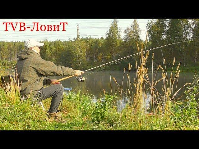 Красивая Осенняя Рыбалка в 4K! Ловля Туманным Утром в Реке на Фидер Разнорыбицу!