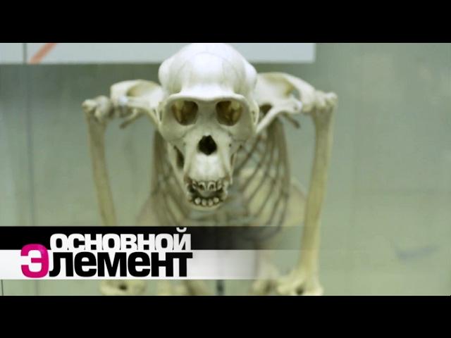 Российский документальный фильм|Человеческий рост Зеркало прогресса|Основной элемент