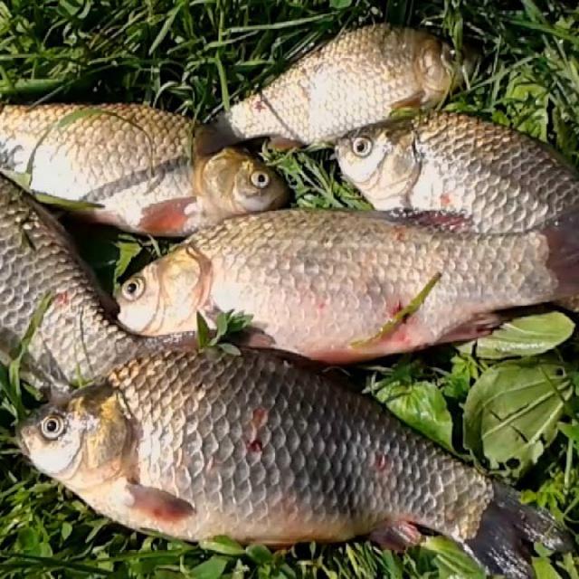 Рыбалка в конце сентября. Ловля карася на фидер.