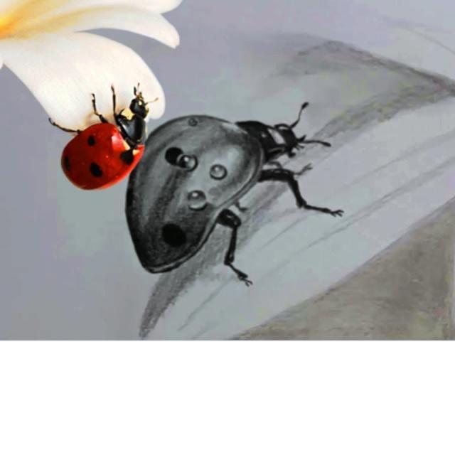 Как нарисовать божью коровку на ромашке карандашом