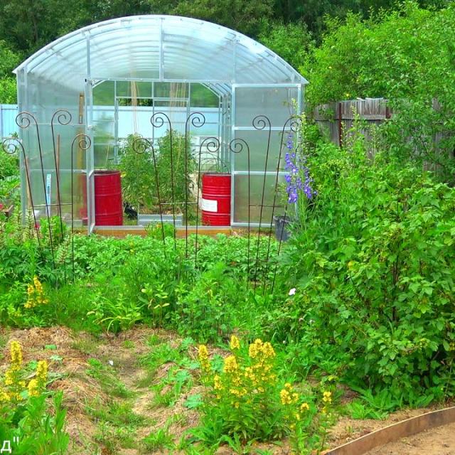 Подготовка почвы в теплице новый способ посева сидератов