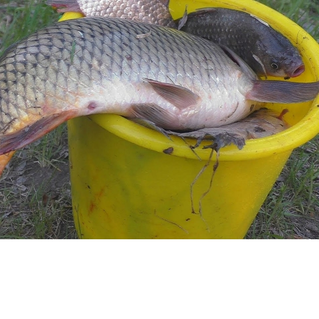 Рыбалка Ловля карпа карася на три разные снасти My fishing
