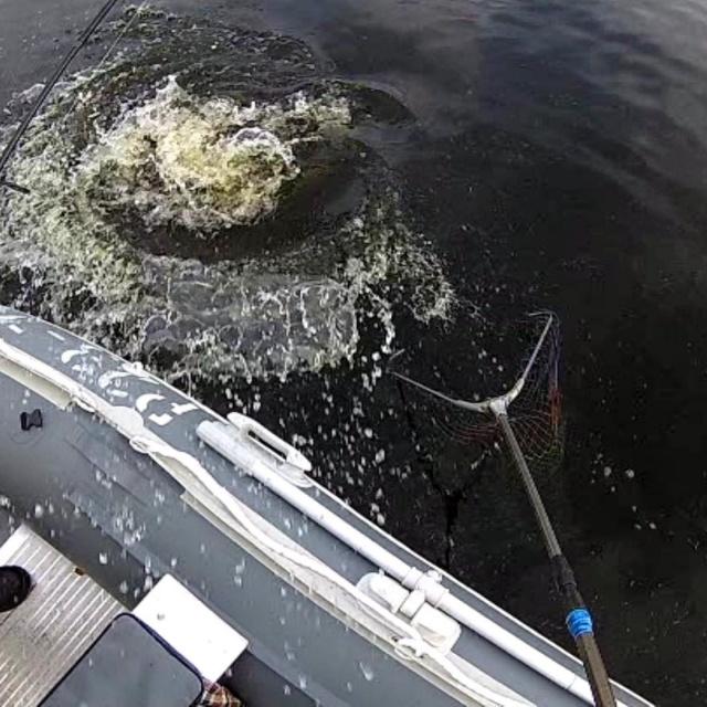 Рыбалка в Карелии Ловля окуня щуки и судака на спиннинг