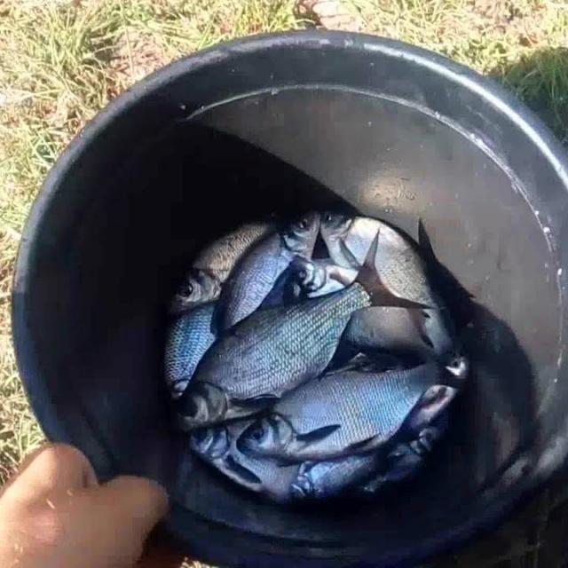 Ловля на Фидер Осенью 2018 г Рыбалка Река Лещ