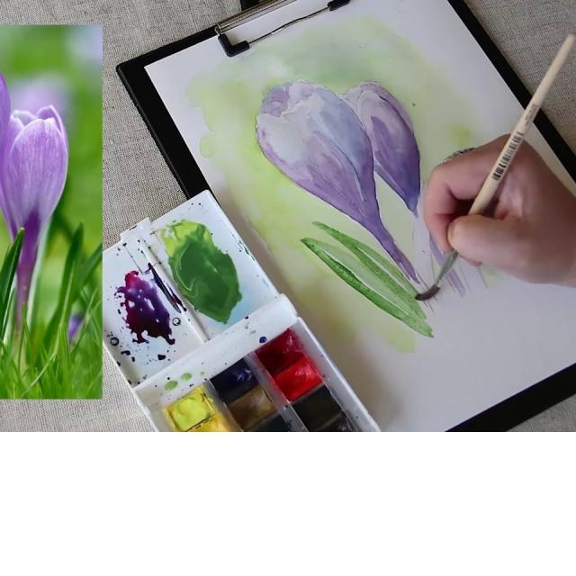 Как рисовать цветы крокусы акварелью
