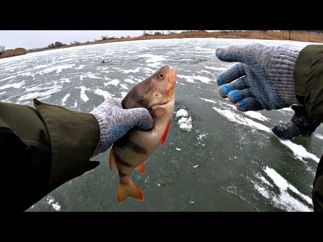 С ТАКИМ ОКУНЕМ никакой щуки не надо!! Зимняя рыбалка на реке 2020.
