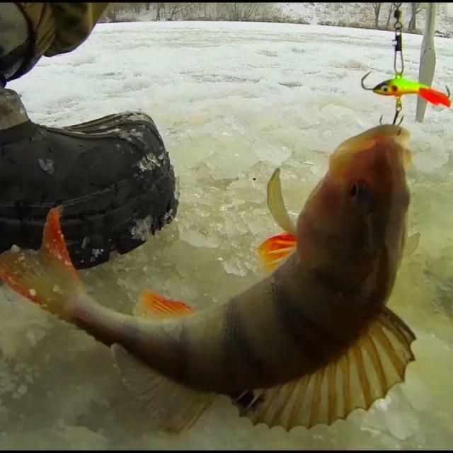 Рыбалка зимой от Михалыча. В поисках зимнего окуня