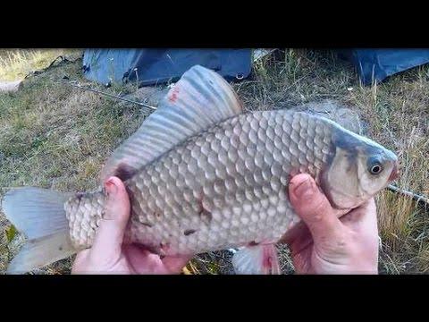 Рыбалка. Ловля карася на пружину .Чесночный Cukk Puffi. Макуха.