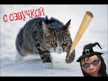 Приколы с котами-Смешная озвучка животных-МЕГА СБОРНИК
