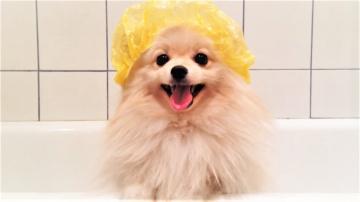 Смешные Собаки Приколы с животными 2018 Топовая подборка Видео приколов до слёз Я РЖАЛ 3 ЧАСА