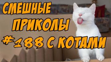 Приколы с Котами ДО СЛЁЗ Смешные коты и кошки 2018