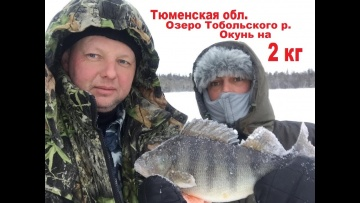 Зимняя рыбалка / Окунь на 2 кг / Тюменская обл., Тобольский р. / Рекордный окунь Тюменской обл.