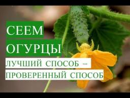 Юлия Минаева -  Посадка Огурцов Лучший Способ - Проверенный Способ 20.05.2017