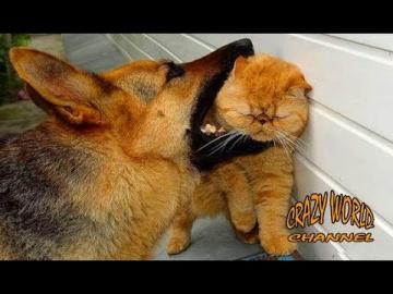 Смешные коты и кошки 2018 приколы с котами и другими животными 2018 приколы про кошек #85