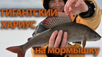 Зимняя рыбалка в Карелии на Пяозере. Часть 1. Хариус.