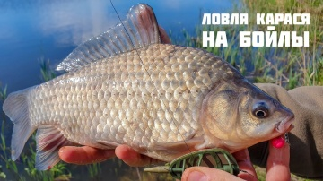 Ловля карася на бойлы  | Укрупняем рыбу крупной насадкой | Flat Feeder