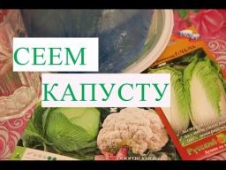 Юлия Минаева - Посев Капусты Рассада Капусты Без Болезней