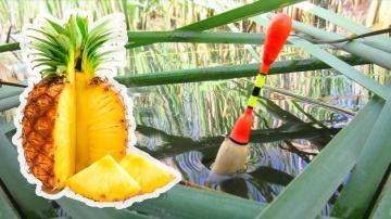 Карась на АНАНАС-Рыбалка в камышах на поплавок с лодки