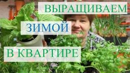 Юлия Минаева-Выращивание зелени зимой в квартире