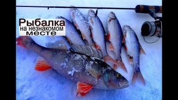 зимняя рыбалка на неизвестном месте. Ловля на мормышку плотвы и окуня с прикормкой.