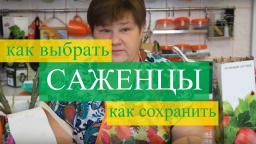 Юлия Минаева -  Саженцы: как правильно выбрать и сохранить. (11.02.16 г.)