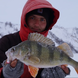 Килограммовые окуни на балансир Зимняя рыбалка 2017
