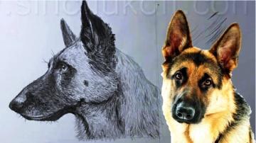 Как нарисовать Овчарку карандашом / Учимся рисовать Овчарку карандашом