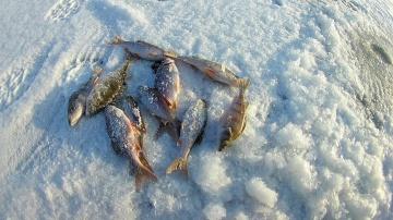 Ловля плотвы и окуня в январе. Зимняя Рыбалка
