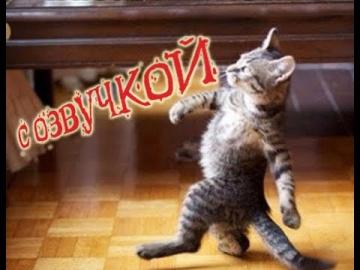 Приколы с котами – Смешная озвучка животных Кот Мурзик PSO