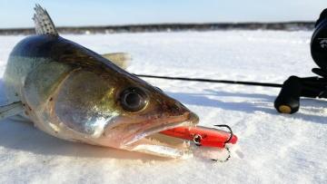 А СУДАК И НЕ ЗНАЛ, ЧТО УЖЕ МАРТ! Зимняя рыбалка 2020, судак на раттлин зимой.