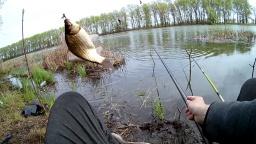 Рыбалка На Крупного Карася В Тихом Лесном Озере | Вываживание в качестве FullHD