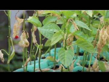 Юлия Минаева 10 САМЫХ УЖАСНЫХ ОШИБОК выращивании РАССАДЫ.