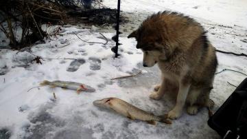 Зимняя рыбалка на жерлицы в декабре 2018 Сезон 2018-2019 Рыбалка с Джесси это что-то